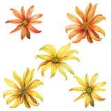 套水彩黄色和橙色雏菊 免版税库存图片