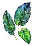 套3片热带叶子 向量例证