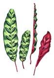 套4片热带叶子 向量例证