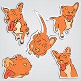 套滑稽的红色狗 免版税库存照片