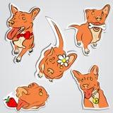 套滑稽的红色狗 图库摄影