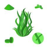 套spirulina海杂草,在平的样式的海藻 免版税库存图片