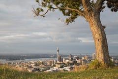 奥克兰市新的地平线西兰 免版税库存图片