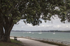 奥克兰港口看法从Devonport,新西兰的 免版税库存图片