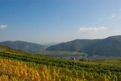 奥地利五颜六色的葡萄园 免版税库存照片