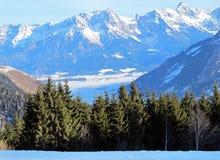 奥地利山结构树 图库摄影