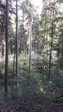 奥地利木头 库存图片