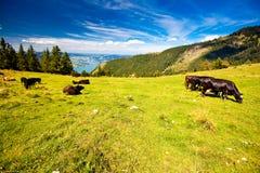 奥地利湖山假期 免版税库存图片