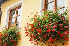 奥地利窗槛花箱 库存照片