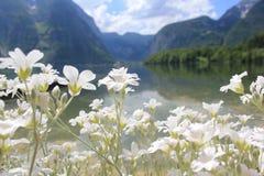 奥地利美丽的hallstatt湖 免版税库存图片