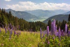 从奥地利阿尔卑斯的看法在滨湖采尔附近 免版税库存图片