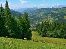 奥地利,从Barenwaldstrasse的阿尔卑斯外型 库存照片