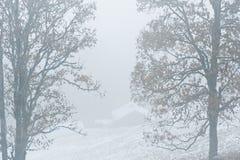 奥地利,萨尔茨堡,树看法在11月天 图库摄影