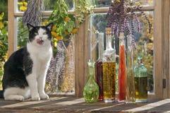 奥地利, Salzburger土地, Altenmarkt,坐在窗口的猫用草本和香料 免版税库存图片