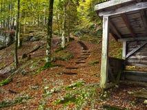 奥地利 修改 休息的木房子在山森林秋天 黄色结构树 免版税库存图片