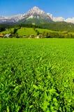 奥地利kaisergebirge 库存照片