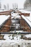 奥斯威辛/波兰- 02 15 2018年:放置在毒气室废墟顶部的罗斯花 免版税库存照片