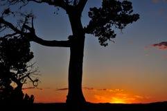 奥斯汀360桥梁树上面剪影日落 库存图片