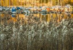 奥斯陆海湾、小船、金黄水和芦苇 库存照片