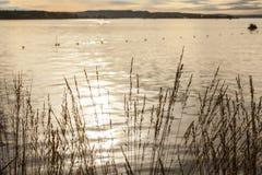奥斯陆海湾、海湾的金黄水和一些阳光 免版税库存图片