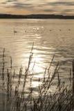 奥斯陆海湾,在日落的金黄水 库存照片
