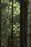 奥林匹克半岛雨林 免版税库存照片