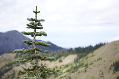 奥林匹克国家森林,华盛顿 库存图片