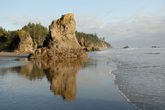 奥林匹克海岸,华盛顿,美国海滩  免版税库存图片