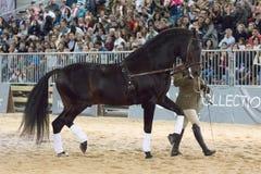 奥林匹克马Oleaje的再出现在马展示的 免版税库存图片