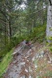 奥林匹斯山希腊绿色杉木和岩石夏天风景背景 库存照片