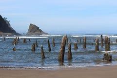 奥秘树桩在俄勒冈海岸的 免版税库存照片