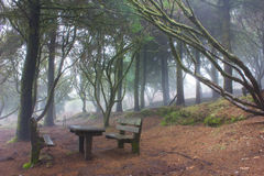 奥秘森林 库存图片