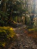 奥秘道路在森林,威尔士 免版税图库摄影