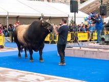 奥维耶多,西班牙- 2018年5月12日:在繁殖的exhibiti的巨大的公牛 库存照片