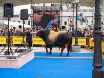 奥维耶多,西班牙- 2018年5月12日:繁殖用的种畜提出冠军 库存图片