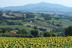 奥西莫(意大利) 免版税库存图片
