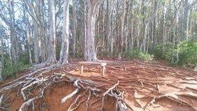 奥阿胡岛山根和树 免版税库存图片