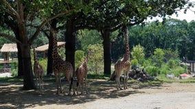 奥马哈动物园 库存照片