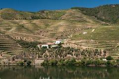 女低音杜罗河葡萄园和河,葡萄牙 库存图片