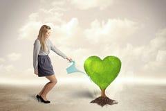 女商人浇灌的心形的绿色树 免版税库存照片