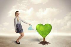 女商人浇灌的心形的绿色树 库存图片