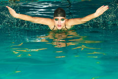 女子运动员游泳在水池的蝶泳 图库摄影