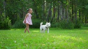 女孩使用与在草坪的一条滑稽的西部高地白色狗品种狗在公园 股票录像