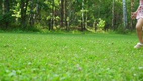 女孩使用与在草坪的一条滑稽的西部高地白色狗品种狗在公园 影视素材