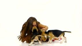 女孩使用了与在演播室的逗人喜爱的小猎犬小狗 影视素材