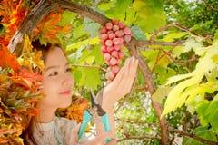 女孩削减一束葡萄,绿色和紫色grap 免版税图库摄影