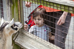 女孩动物园 库存图片