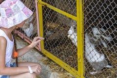女孩和一只兔子在笼子 免版税库存照片