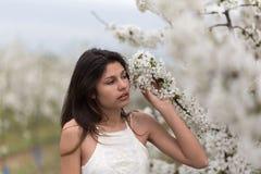 女孩和一棵开花的樱桃树 库存照片