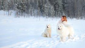 女孩和两条狗萨莫耶特人在冬天森林里 库存照片